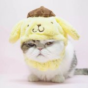 M贪睡猫M