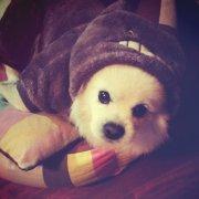 EGT_G,发布寻狗启示热爱宠物狗狗,希望流浪狗回家的狗主人。