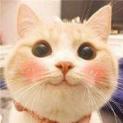 二貓白菜君