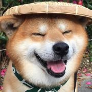 0721好好学习2021,发布寻狗启示热爱宠物狗狗,希望流浪狗回家的狗主人。