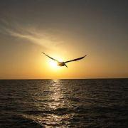 阳光天涯728微博照片