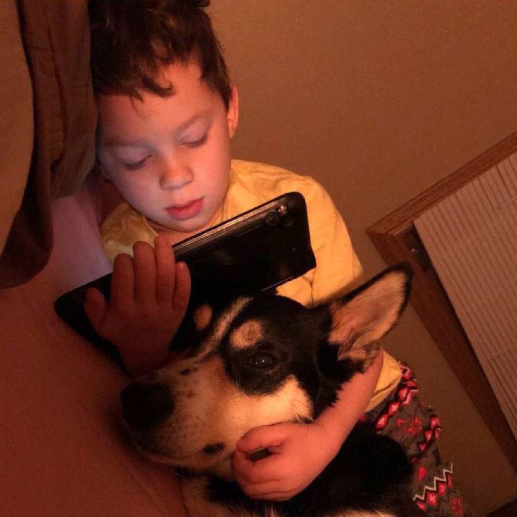 ⚡️忙于学习的法考狗+考研龟