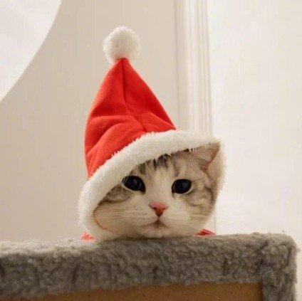 猫咪这么可爱!我先撸为敬!