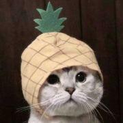 一个超大的菠萝