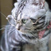 唐宁街的猫先生微博照片