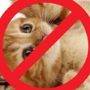 戒猫中心微博照片