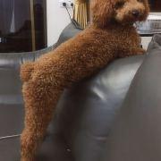 猪精精精,发布寻狗启示热爱宠物狗狗,希望流浪狗回家的狗主人。