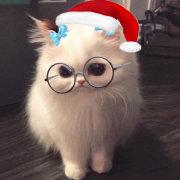 我们会有猫旳微博照片