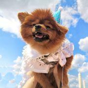 D多小多,发布寻狗启示热爱宠物狗狗,希望流浪狗回家的狗主人。