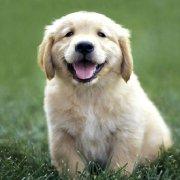 每日一狗微博照片
