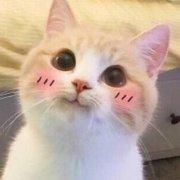 猫��h�_粉红色的猫h
