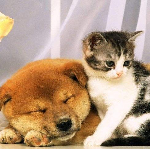 猫咪狗狗的选品,我们是认真的。
