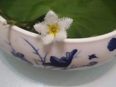 一叶莲花开