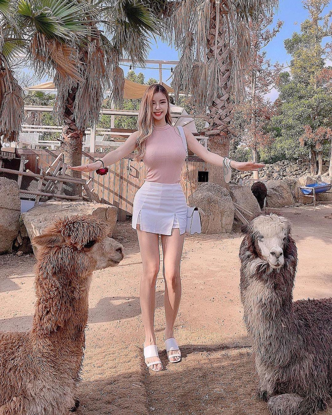 草尼马真的好大!韩国的网红美女차차和巨型羊驼合照网友:旁边是双峰骆驼?-新图包