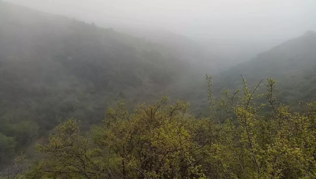 雾走瓮山过