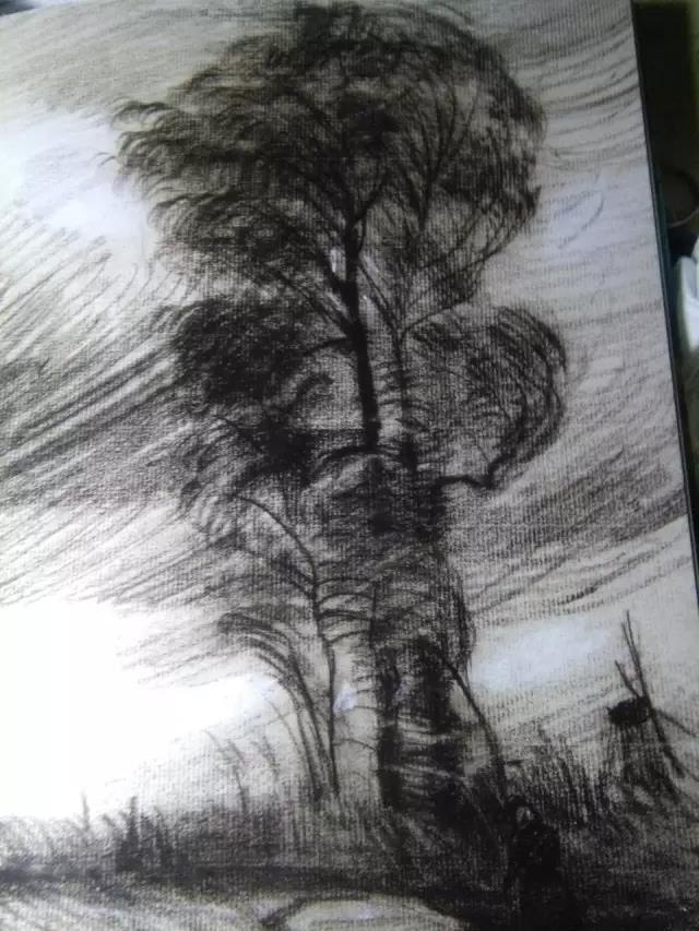 生活冷知识《梵·高的树》的图片