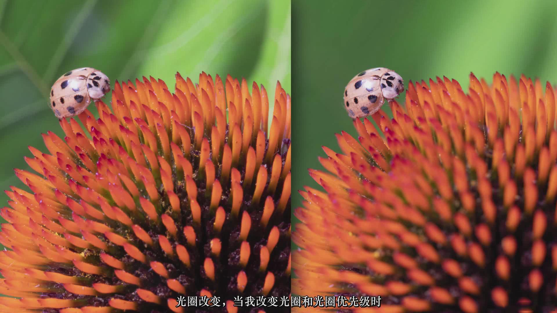 摄影教程_JOSHUA DUNLOP-掌握宏观微距摄影-捕捉惊人的细节-中文字幕 摄影教程 _预览图7