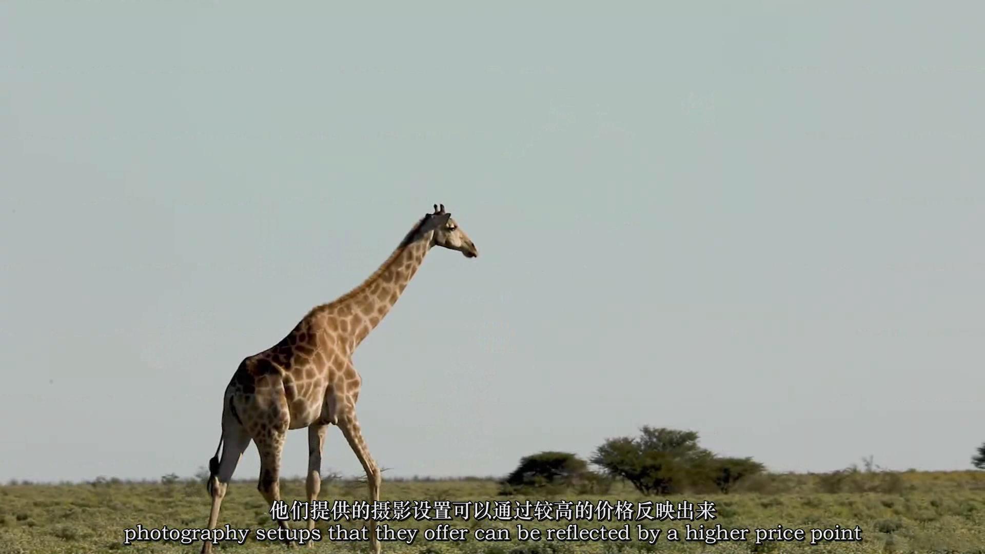 摄影教程_Chase Teron的终极野生动物摄影及后期套装教程附RAW素材-中英字幕 摄影教程 _预览图15