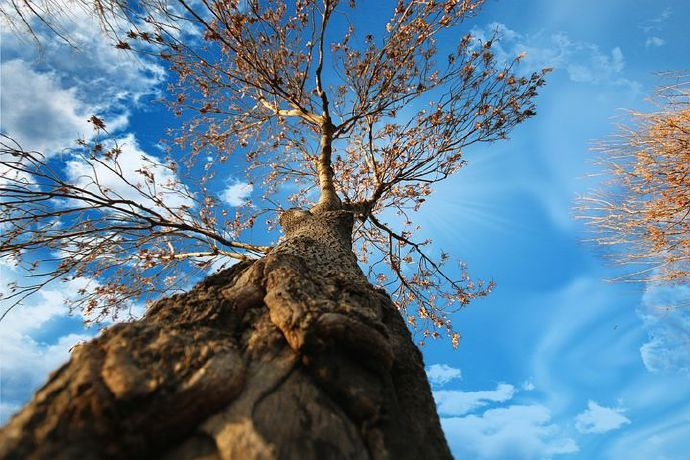 tree-5491570__480